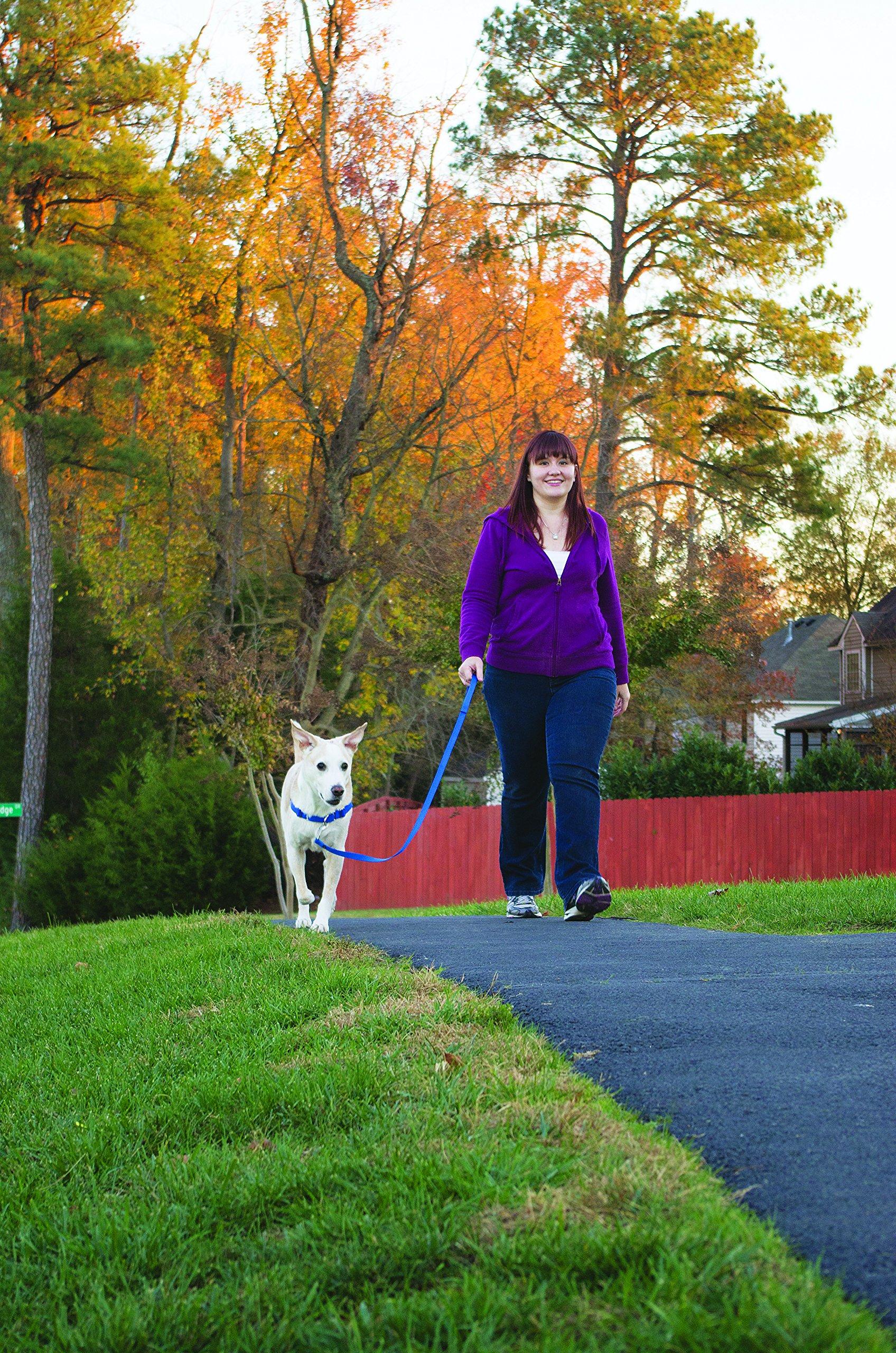 PetSafe Easy Walk Harness, Medium/Large, BLACK/SILVER for Dogs by PetSafe (Image #6)