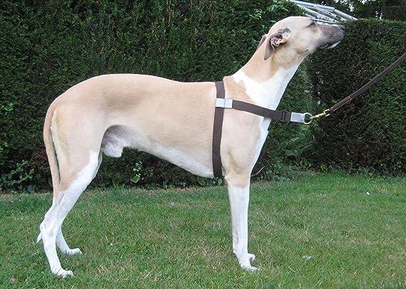 Walk Your Dog With Love Arnés para Perros con Peso de Entre 11 y ...