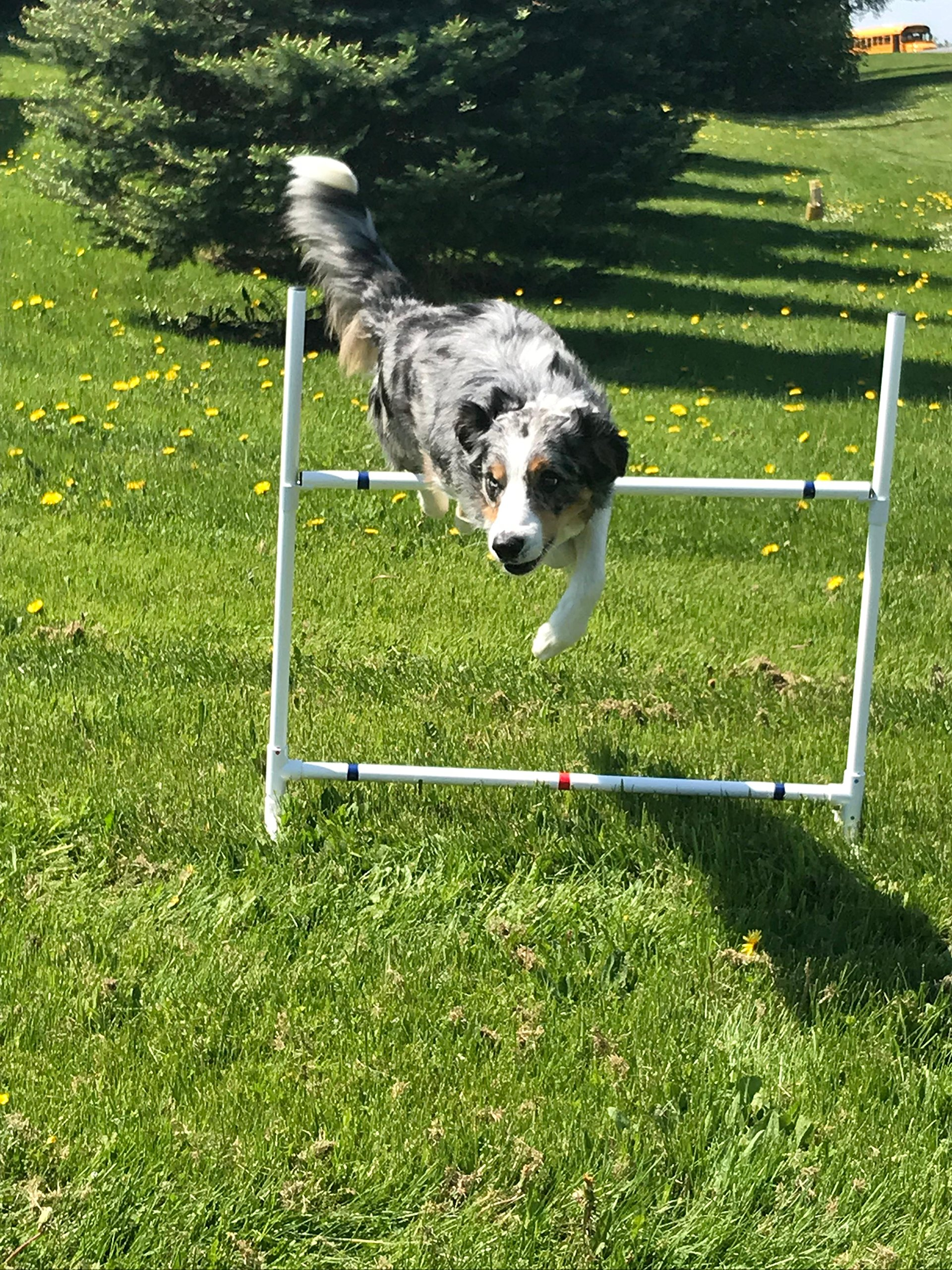 Dog Agility Equipment Single Bar Jumps | Set of 2 jumps by Dog Agility Shop, LLC (Image #1)