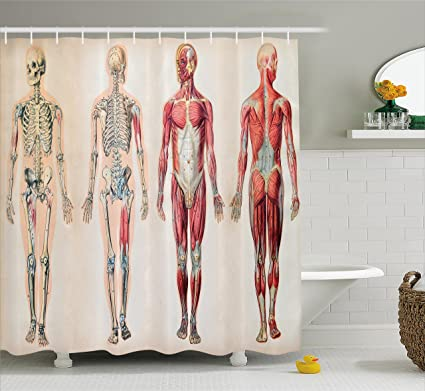 Ambesonne Human Anatomy Shower Curtain Vintage Chart Of Body Front Back Skeleton And Muscle System