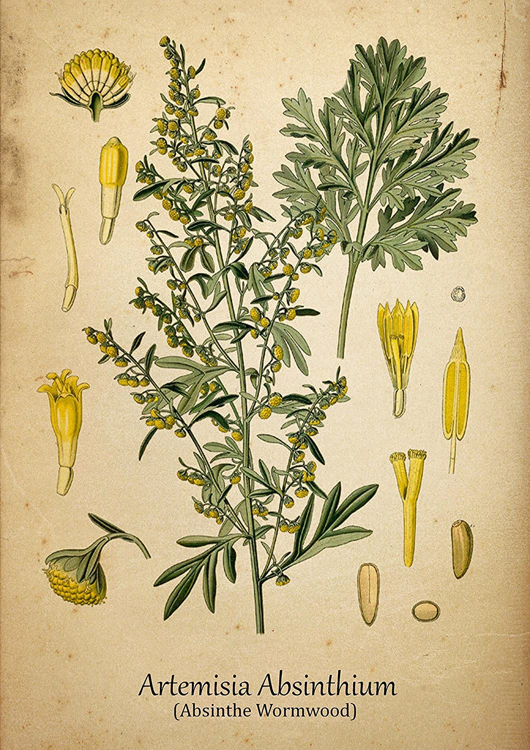 Antique wallhanging depicting wormwood