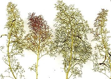 WWS Árboles Naturales Mixtos de Teloxys - Modelismo ...
