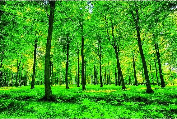 GREAT ART Mural De Pared – Árboles – Naturaleza Paisaje Puro Bosque Claro Relajación De Verano Planta De Sol Flora Bosque Helechos Rama Foto Tapiz Y Decoración (336 x 238 cm): Amazon.es: Hogar