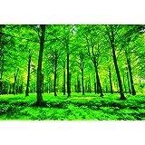 GREAT ART Poster – Summer Trees – Picture Decoration Nature Landscape Forest Glade Sunbeams Plants Flora Ferns…