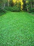 BioLogic New Zealand Clover Plus Chicory