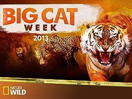 Big Cat Week 2013  Season 1