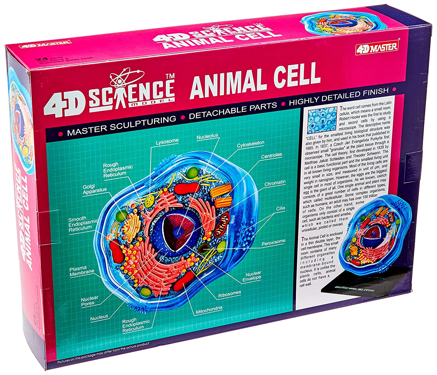 Famemaster 4d Science Animal Cell Anatomy Model Toys Not Labeled 3d Diagram Project Parts Structure Games