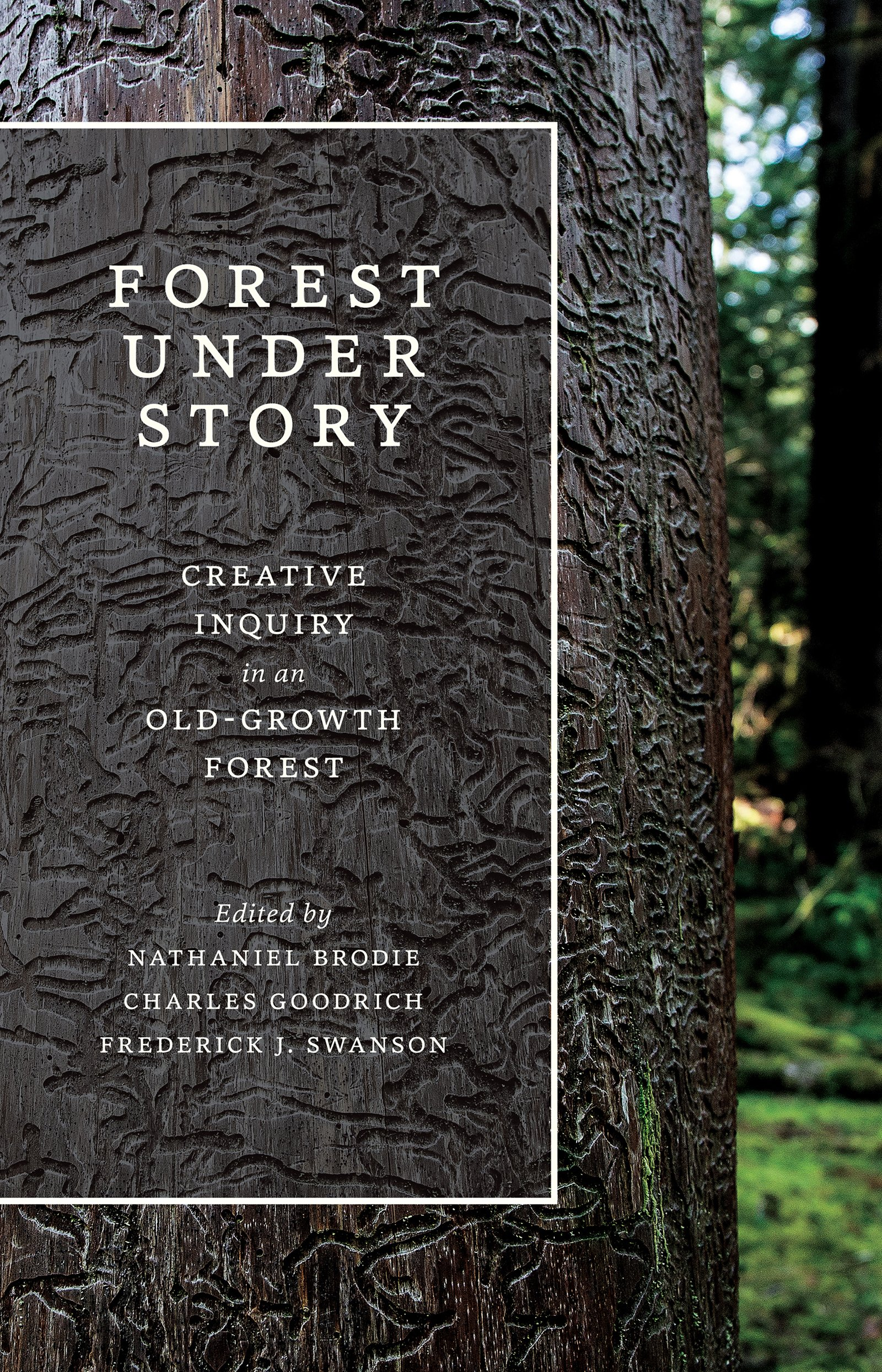 Download Forest Under Story: Creative Inquiry in an Old-Growth Forest (Ruth Kirk Book Fund) PDF