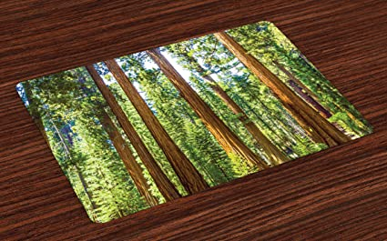 Ambesonne National Parks Place Mats Set Of 4 Up View Tree Branches In Scenic