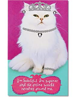 Amazon hallmark shoebox funny birthday greeting card pets american greetings funny birthday card for her with glitter inner cat 5760191 bookmarktalkfo Images