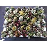 Piante grasse in vaso cm. 3,5 set N. 46 piante