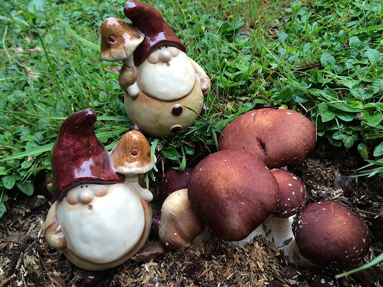 Braunkappe Bio-Pilzbeet, eigener kleiner Pilzgarten, komplettes Set Pilzmännchen