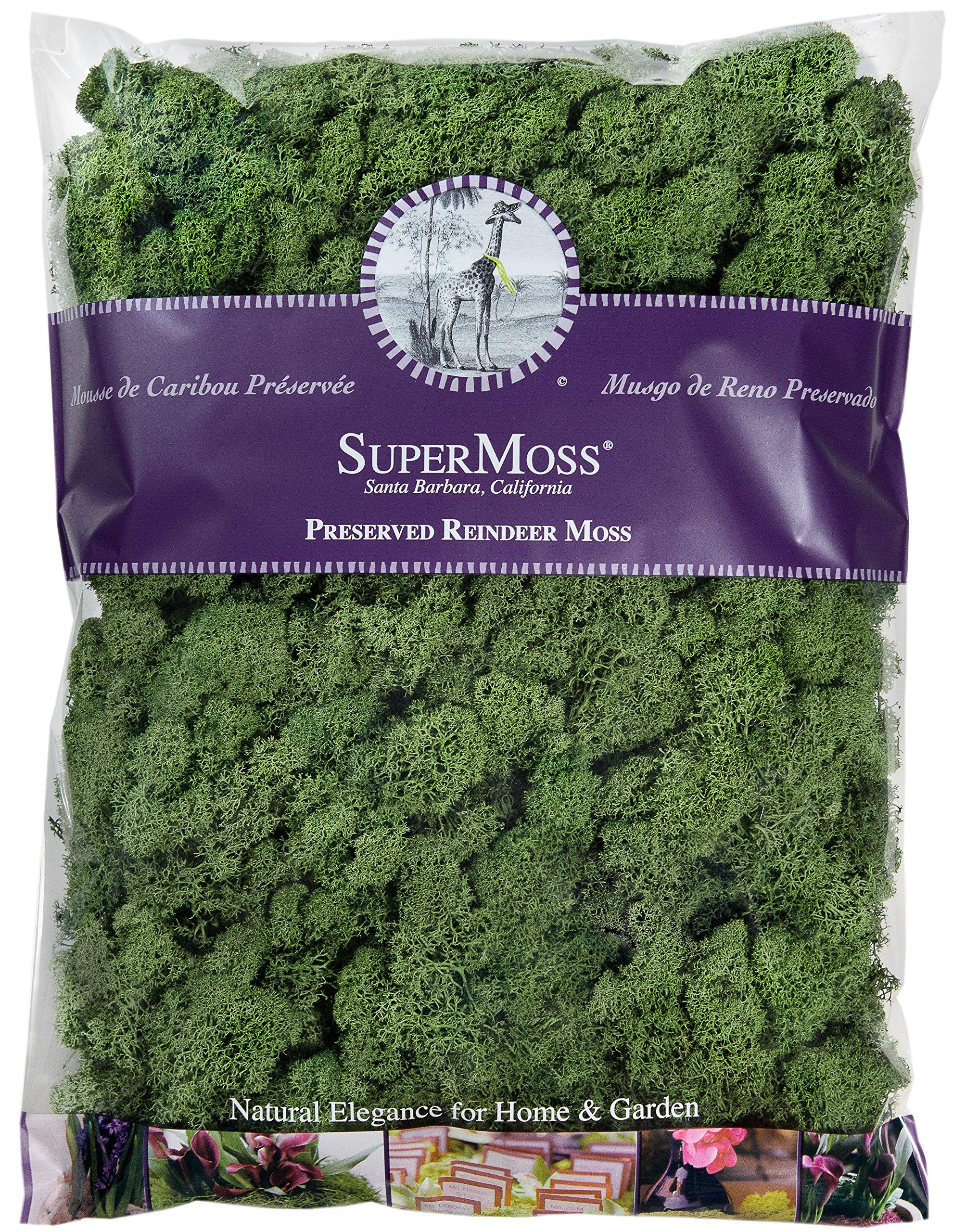 SuperMoss (25154) Reindeer Moss Preserved Bag, 16 oz, Basil