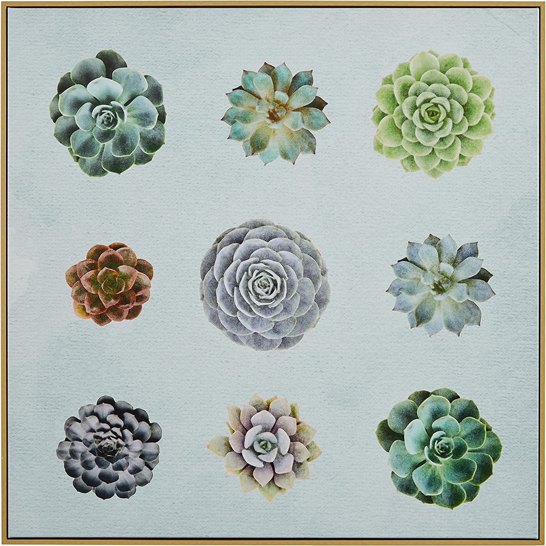 Amazon Brand – Rivet Six Succulent Print in Birch Floater Frame Wall Art, 24 x 24