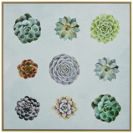 Amazon.com: Rivet Six Succulent Print in Birch Floater Frame, 16\