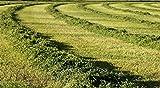 Thunder Acres Premium Alfalfa Hay