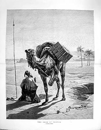 Kamel datiert Anzeige