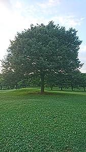 天乃 聖樹