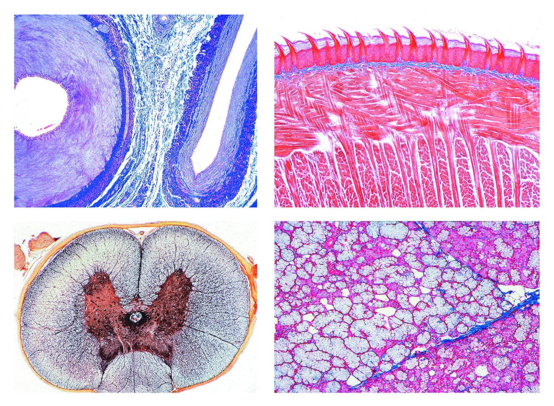 Biología Microscopía Micro muestras Serien histología Side ...