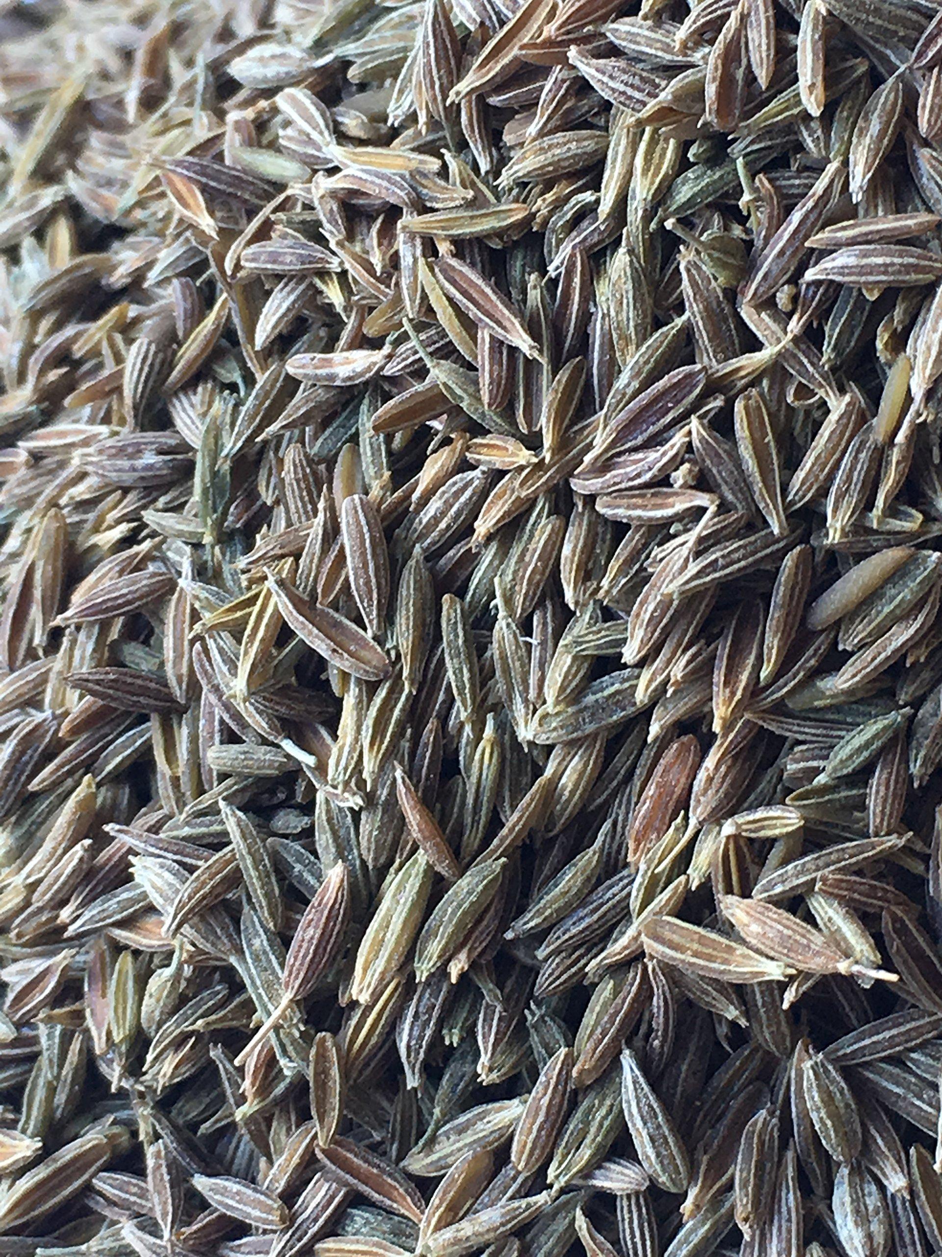 Cumin, 100% Natural Green Persian Cumin. Premium quality (105 Ounce)