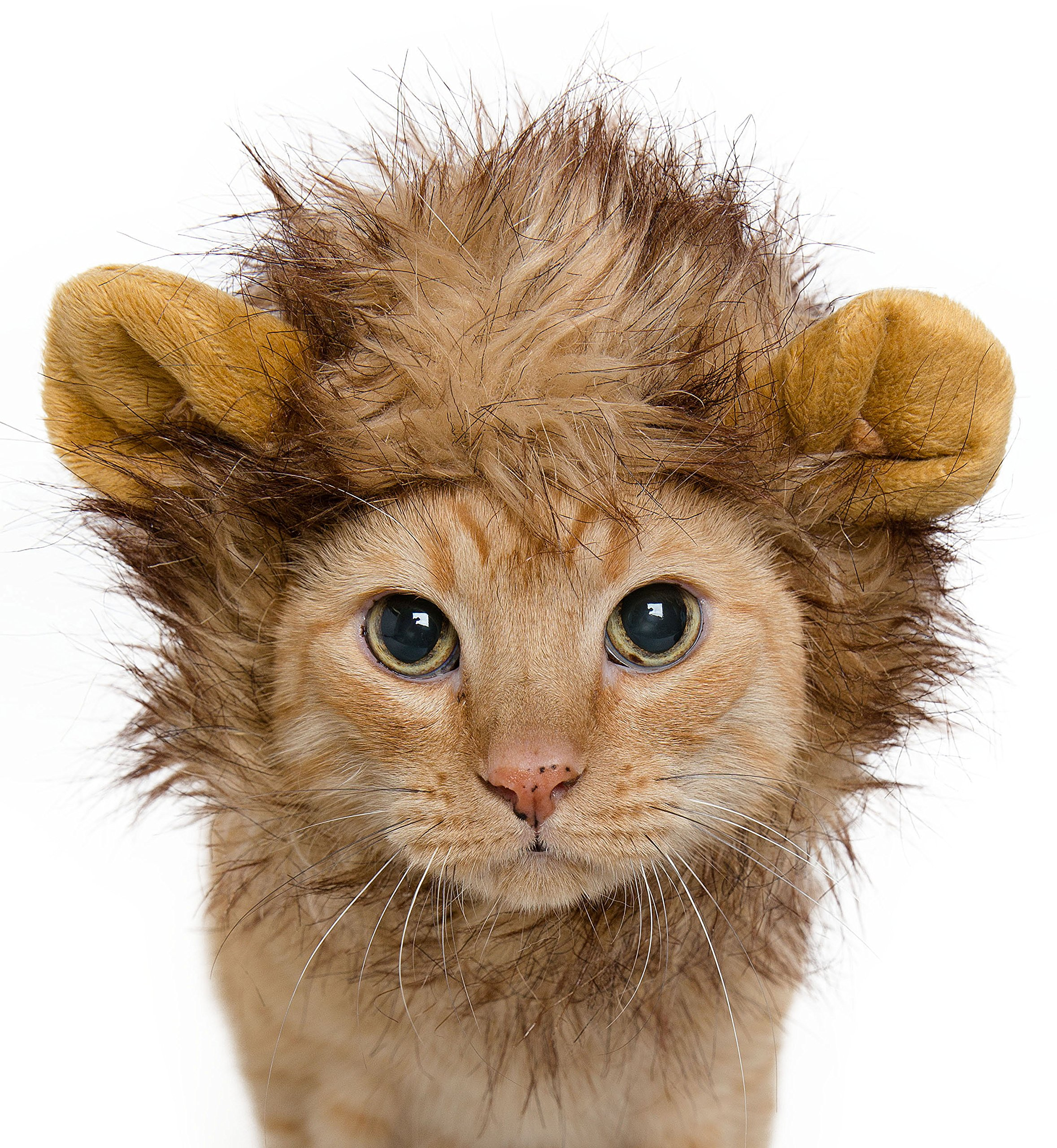 Lion Mane Costume for Cats & Dogs – Free Feathered Catnip Toy Included – Cute Halloween Pet Costume for Yorkies, Maltese, Puppies, Cats, Kittens