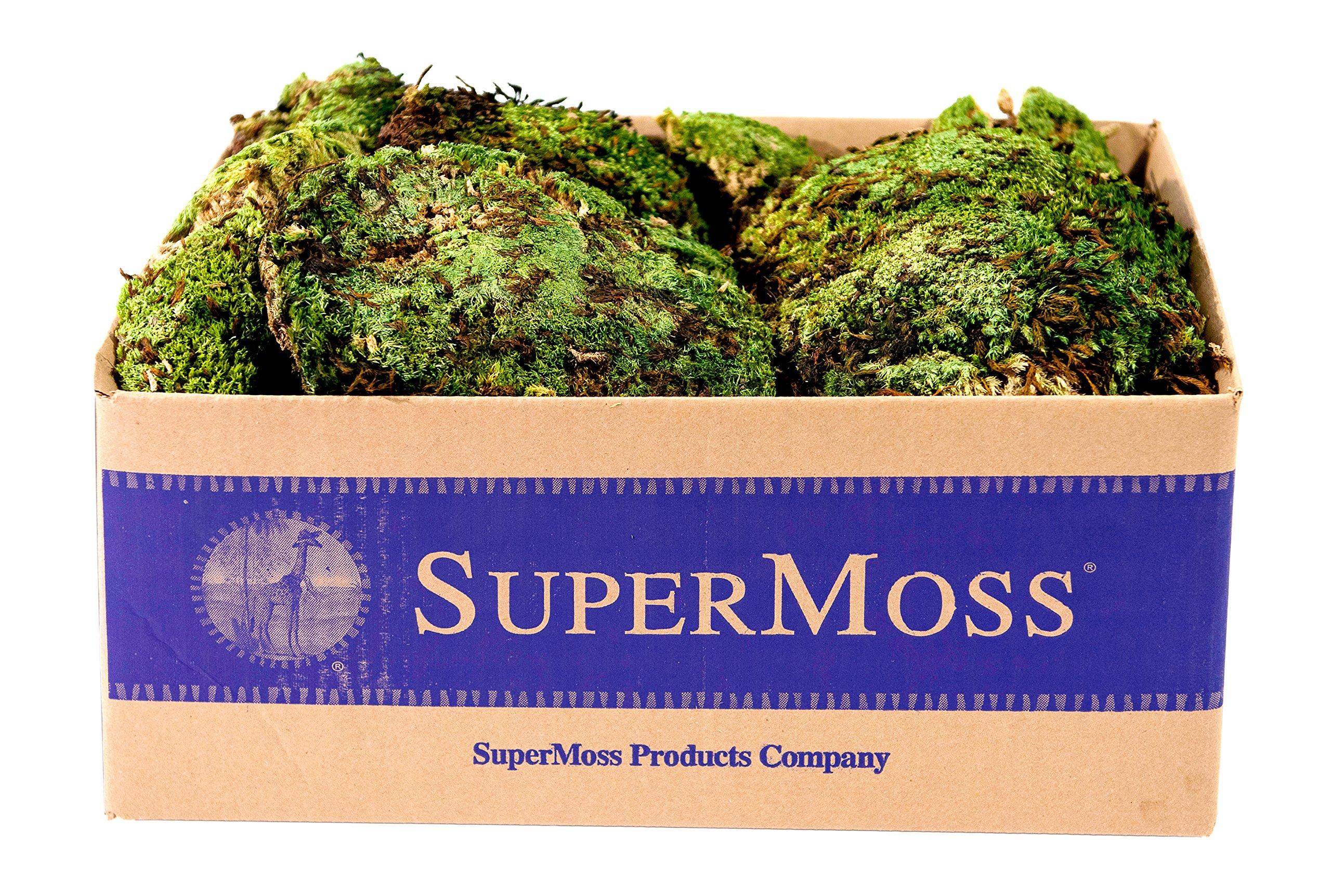 SuperMoss (21881) Royal Pool Moss Preserved, Fresh Green, 3lbs