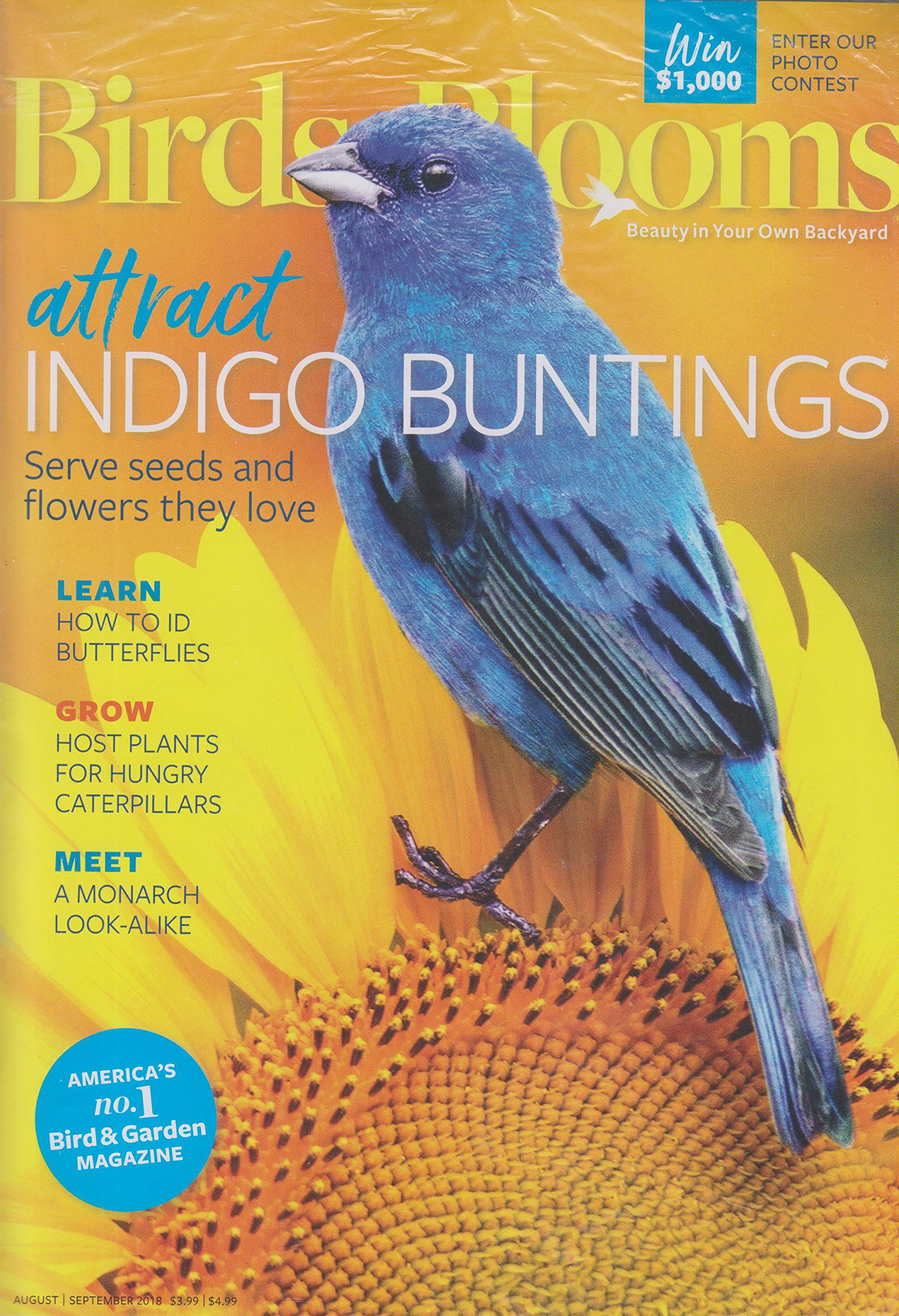 How To Attract Indigo Buntings To Your Backyard - House of ...