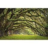Viale verde delle querce in estate fotomurale decorazione da parete by GREAT ART (210 x 140 cm)