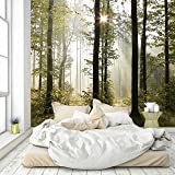 Carta da Parati Foresta 274,5 x 254 cm Legno Alberi Luce solare Fotomurali Poster Gigante Inclusivo Pasta Polvere di Colla Nuova livingdecoration