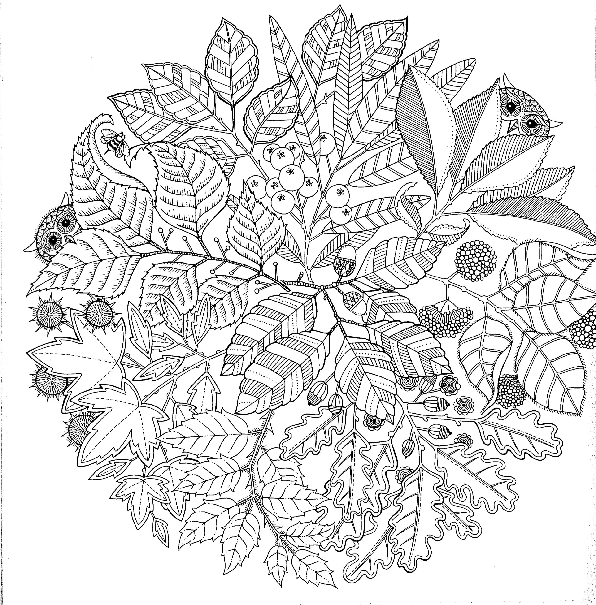 Jardin secret carnet de coloriage et chasse au tresor anti stress Johanna Basford Amazon Books