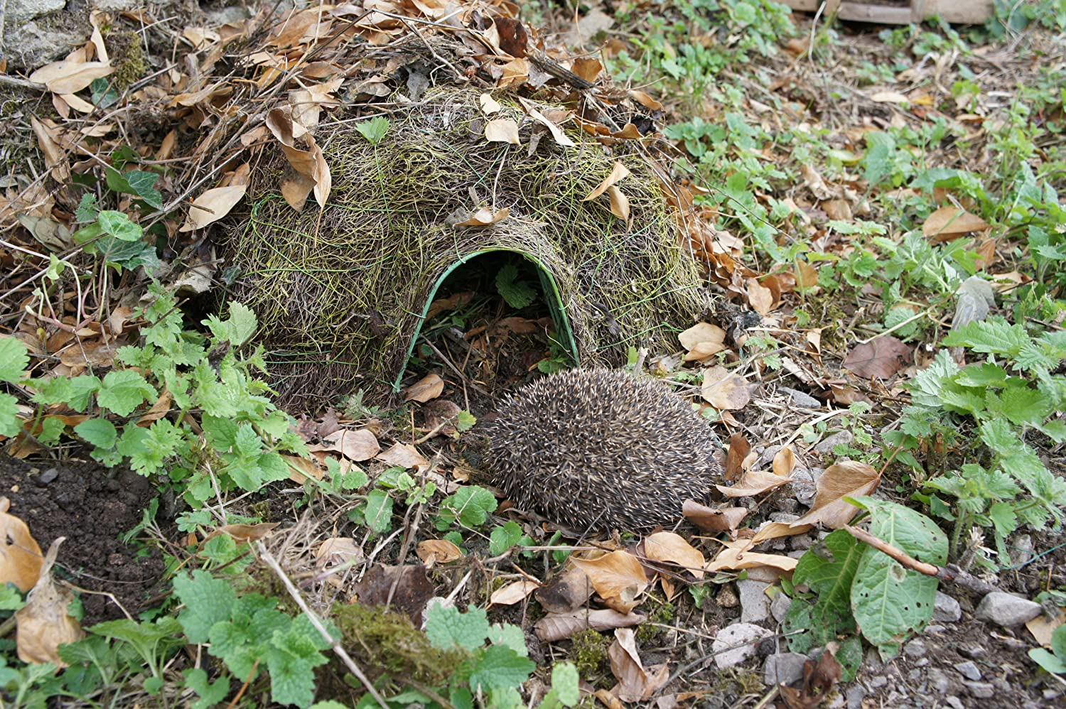 Wildlife World Hogitat Hedgehog Home HH5