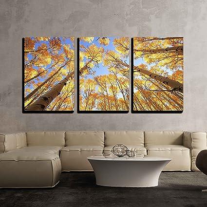 5176e9eac04 Amazon.com  wall26 - Aspen Trees with Fall Color - Canvas Art Wall Decor -  16