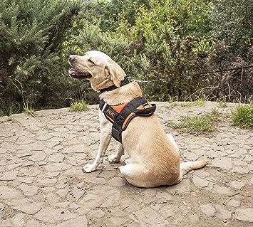 Rac Advanced Pet Dog Luxury No Pull Padded Adjustable Reflective Stitching Dog Walking Vest Harness Medium Amazon Co Uk Pet Supplies