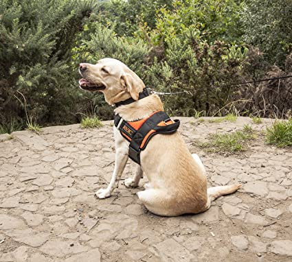 RAC Advanced 2 in 1 Car Safety Dog Harness Extra-Large