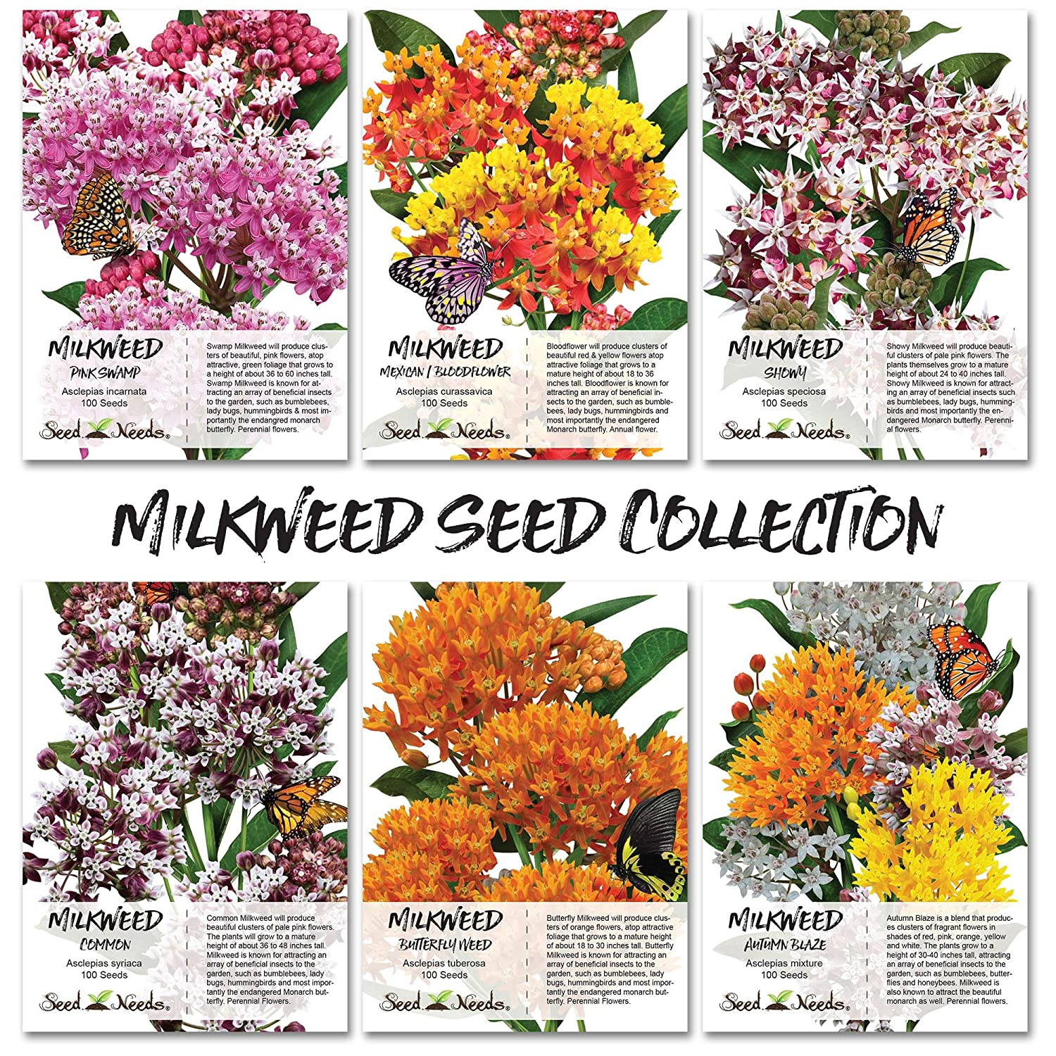 Milkweed >> Amazon Com Seed Needs Milkweed Seed Collection 6 Individual Seed