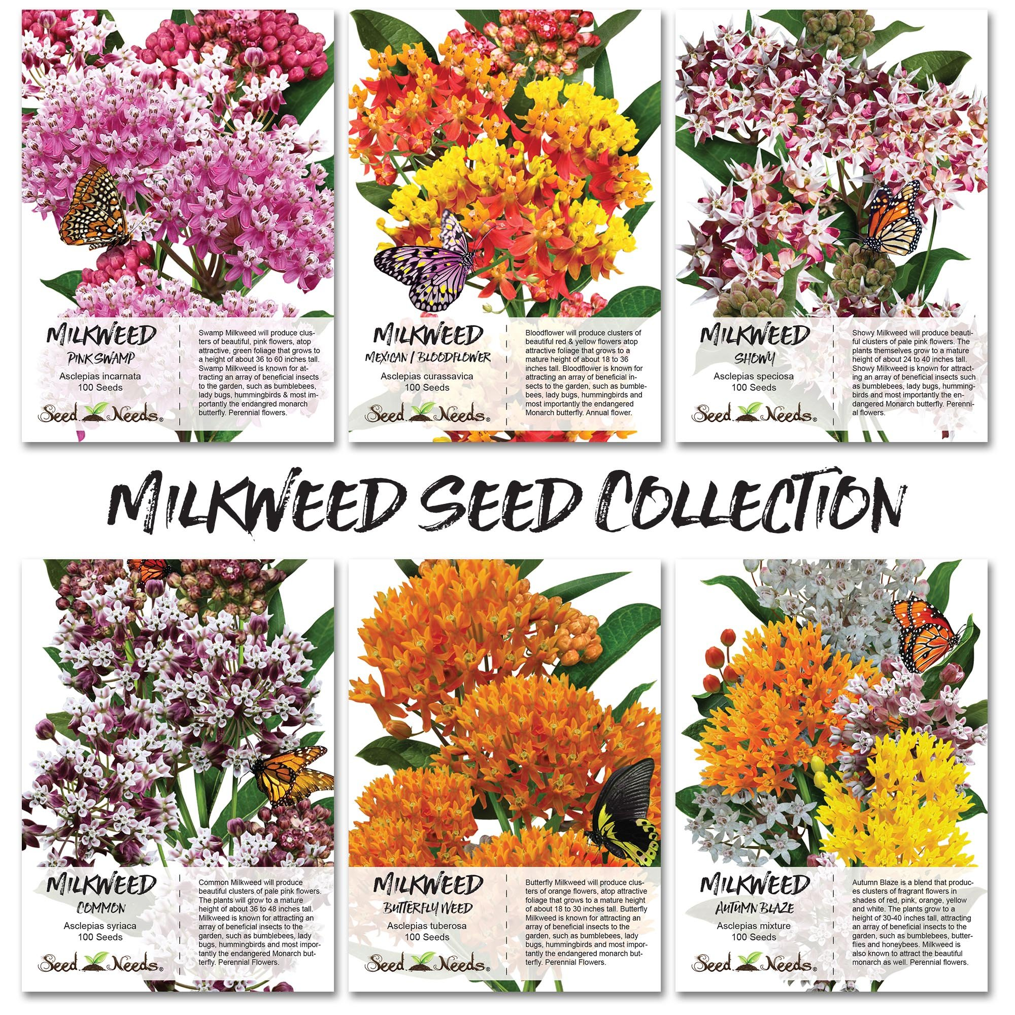 Seed Needs Milkweed Seed Collection (6 Individual Seed Packets) Open Pollinated Seeds