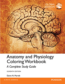 anatomy and physiology coloring workbook a complete study guide global edition law express - Anatomy And Physiology Coloring Book Pdf