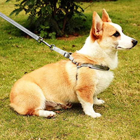 HAPPY HACHI Arnés Perro Reflectante Acolchado Dog Harness ...