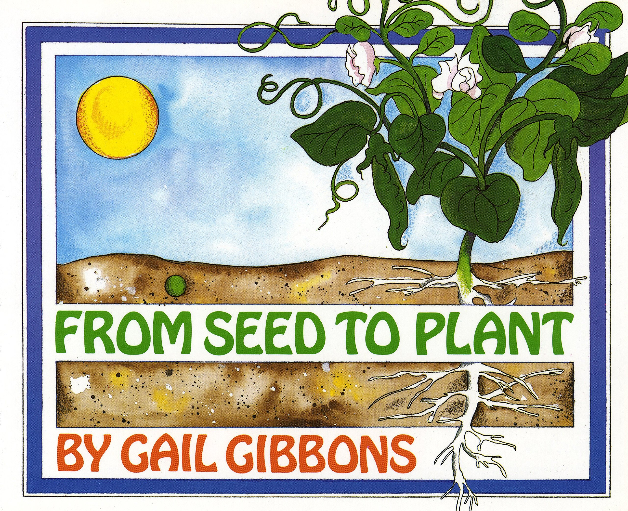 From Seed To Plant Gail Gibbons Books Bean Germination Diagram