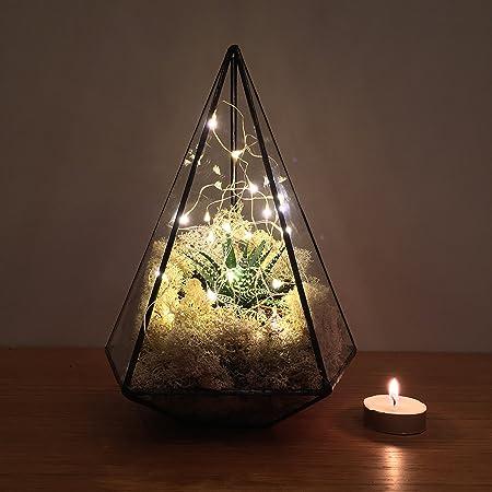 Jewel Terrarium With Live Succulent Plants And Led Fairy Lights