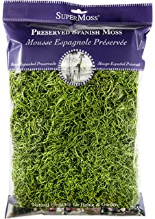 5lbs Super Moss Green Branched Lichen Parmelia 23544
