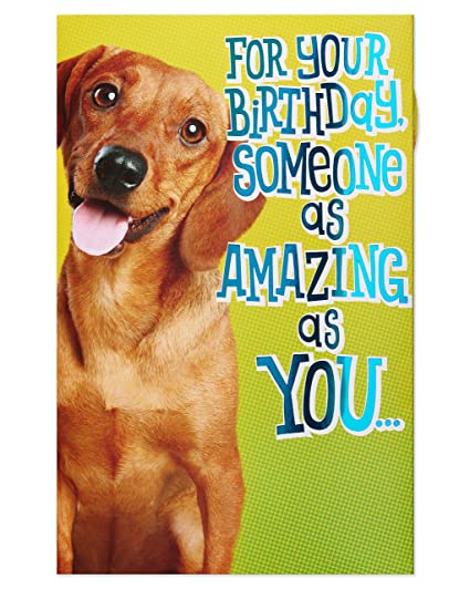 Amazon American Greetings Funny Dog Birthday Card With Foil