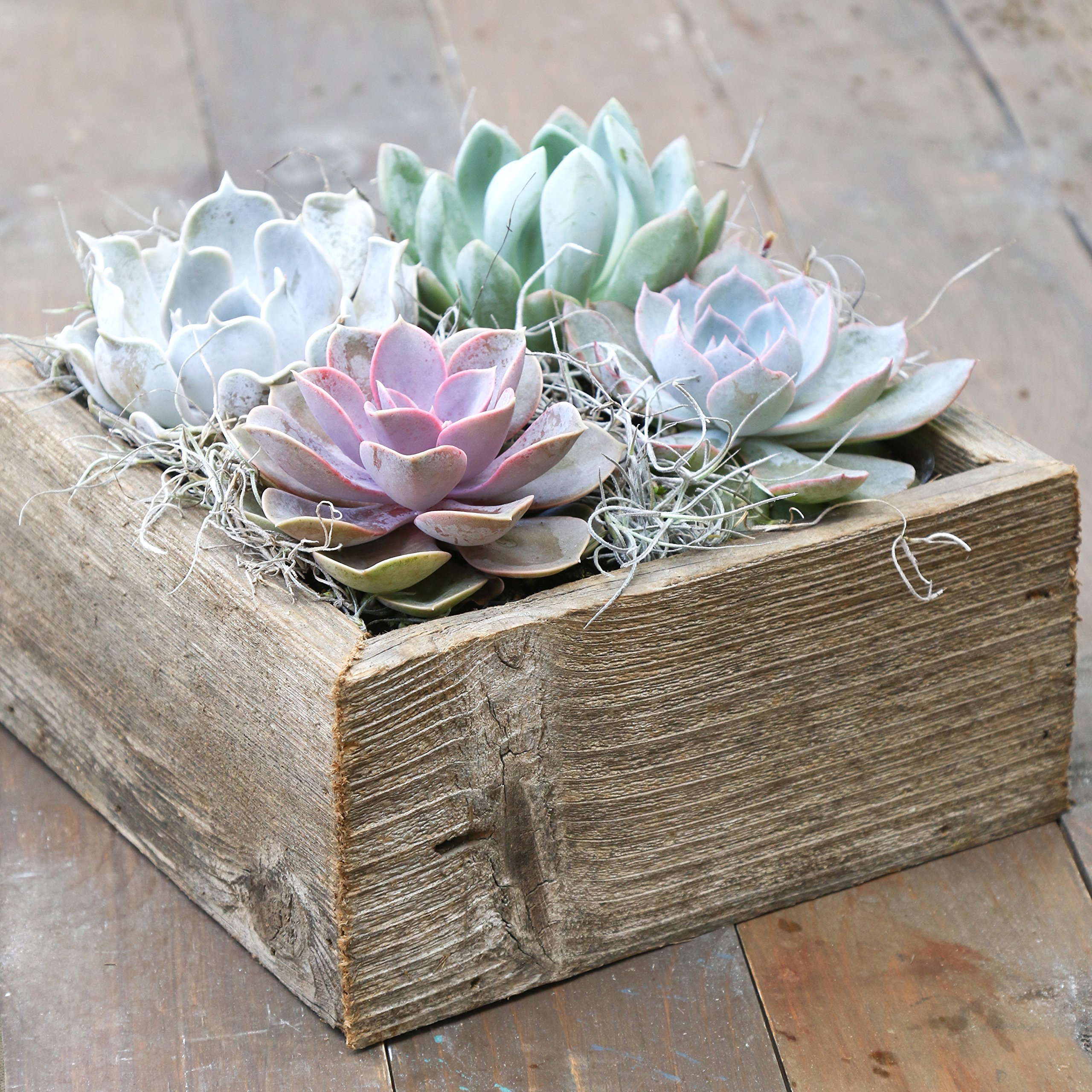 Colorful Succulent Garden in Reclaimed Wood Succulent Planter - 8.5'' Shallow Cube - Ships from Easy to Grow Bulbs, a California Licensed Nursery