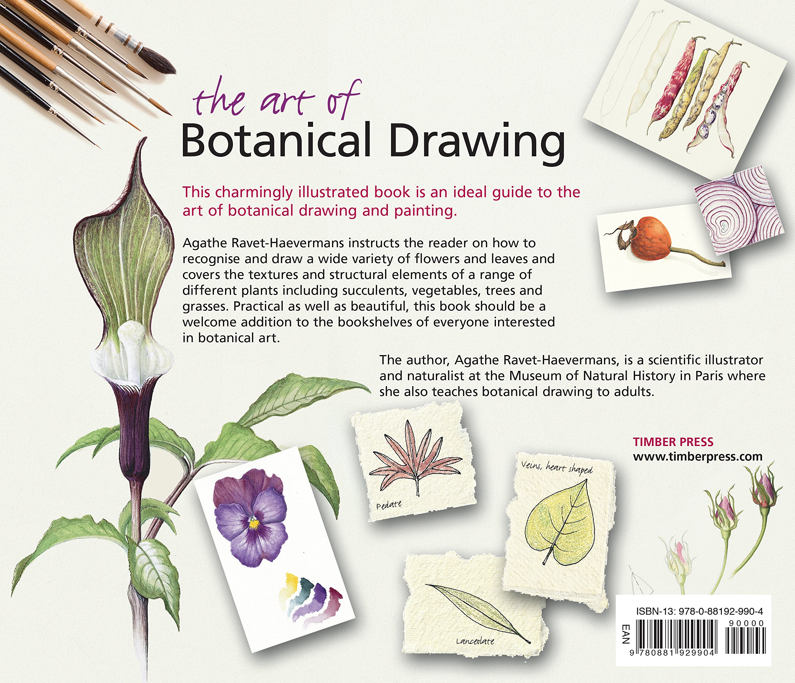 The Art Of Botanical Drawing An Introductory Guide Ravet