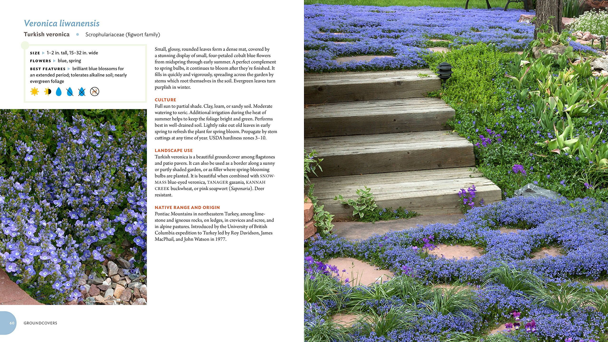 Pretty Tough Plants: 135 Resilient, Water-Smart Choices for a Beautiful  Garden: Plant Select: 9781604697353: Amazon.com: Books