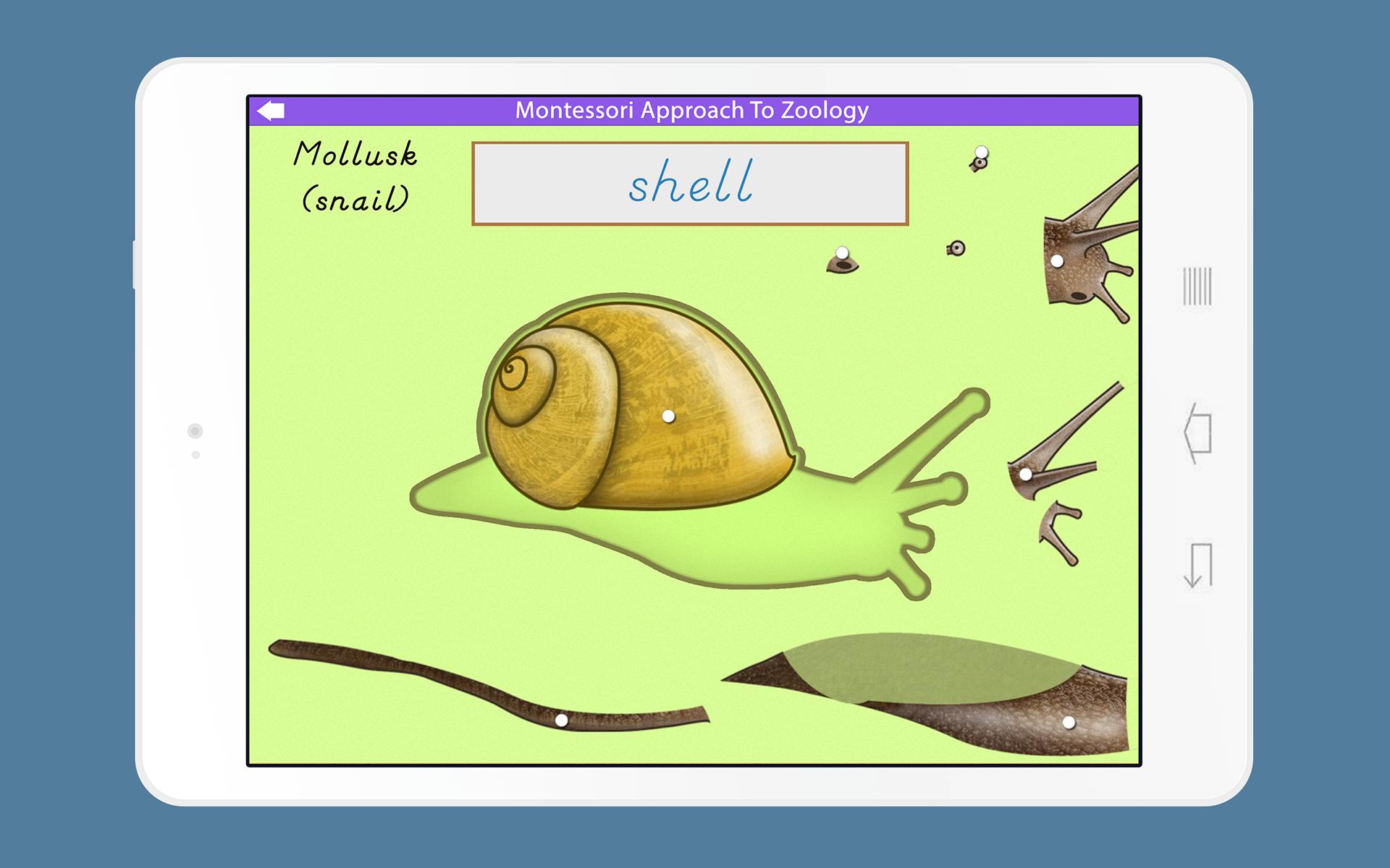 amazon com: montessori zoology - parts of animals - invertebrates: appstore  for android