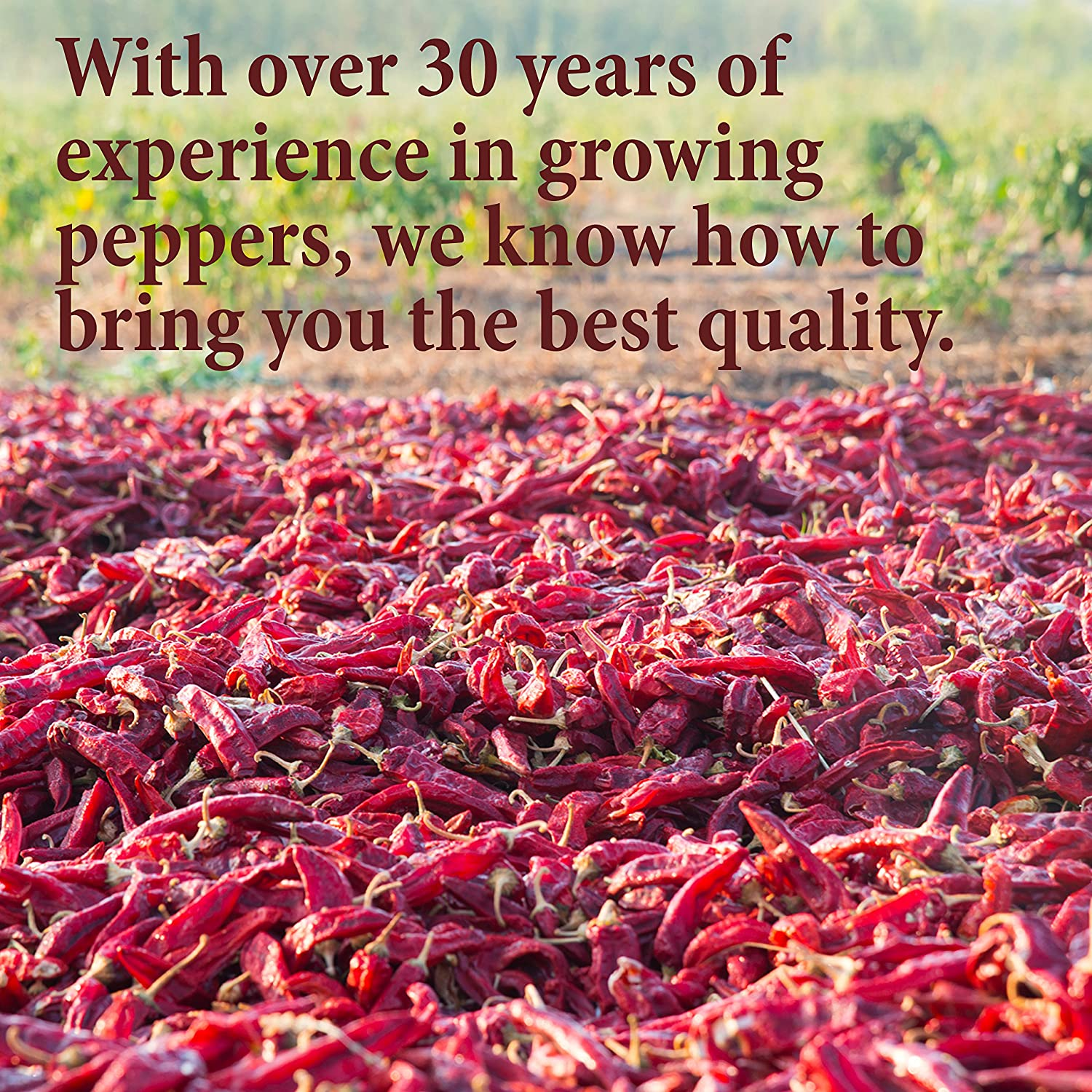 30 Custom Mexican Red Chili Pepper Personalized Address Labels