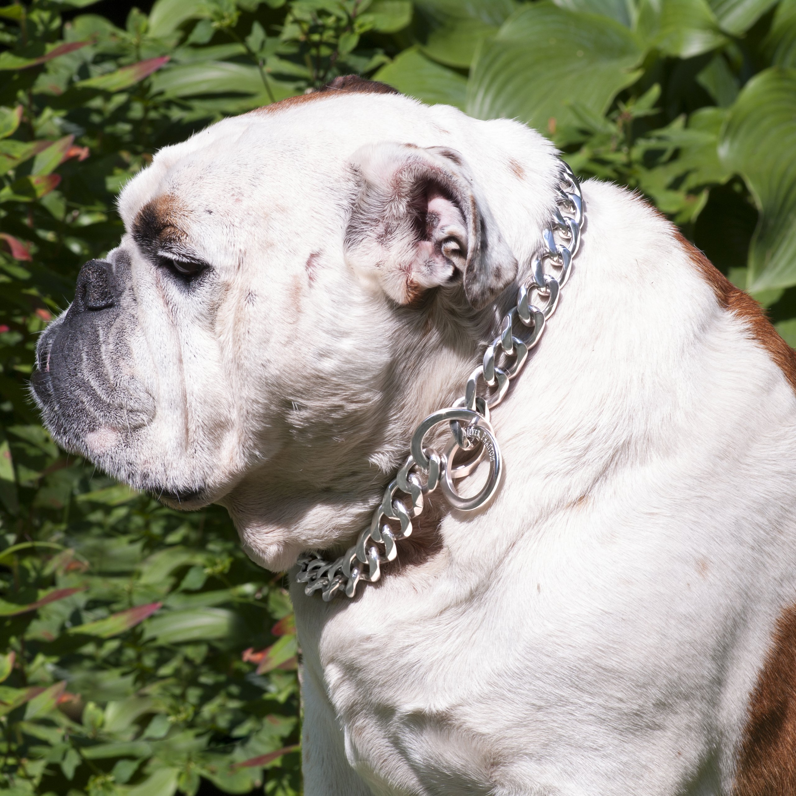 Ultra Strong Designer Pitbull Dog Collar - 20mm Wide Slip Chain Collar - 680 Lbs Strong! - Best for Pit Bull, Mastiff, Bulldog, & Big Breeds, 26'' Length