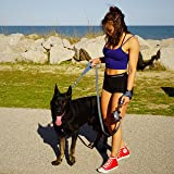 Black Rhino Dog Leash - Heavy Duty - Medium & Large Dogs | 6ft Long Leashes | Two Traffic Padded Comfort Handles for Safety Control Training - Double Handle Reflective Lead