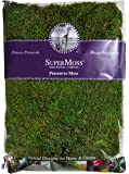 Super Moss 21513 Preserved Sheet Moss, Fresh Green, 16-Ounce